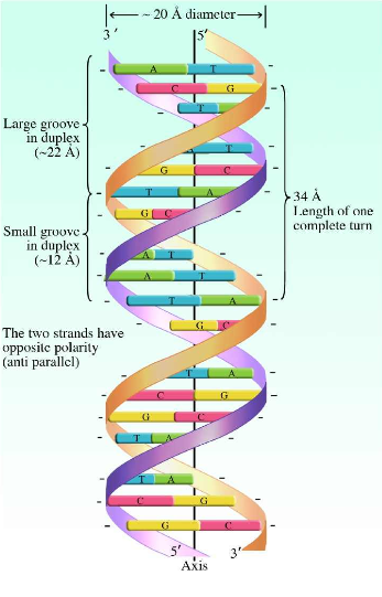 dna picture 1